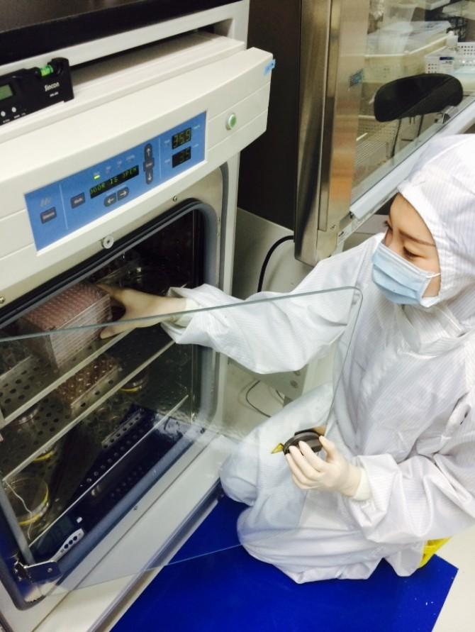 연구팀이 줄기세포를 이용해 만든 간세포를 배양하고 있다. - 고려대 생명공학부 제공